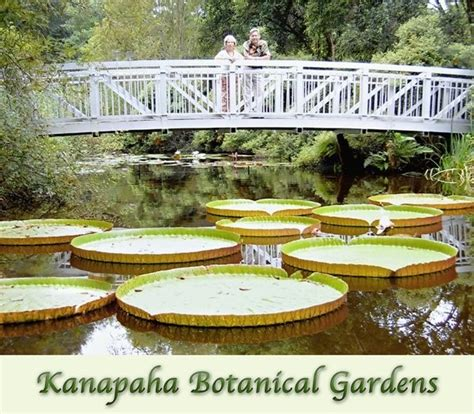 kanapaha botanical gardens wedding ceremony reception