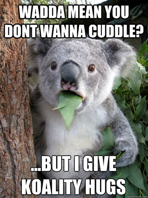 Cuddle Meme - wadda mean you dont wanna cuddle but i give koality hugs surprised koala quickmeme