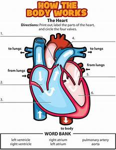 69 Best Poster Of Circulatory System  Cardiovascular System