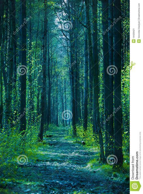 twilight forest stock image image