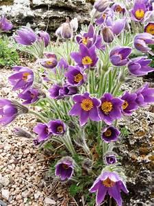 Liezel's Bit of Earth: From a Colorado Garden