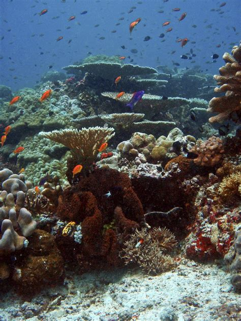reef national geographic society