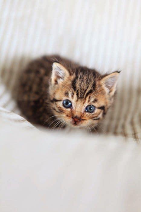 katzenbabys fotos kostenlos bilder und sprueche fuer