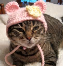 crochet hats for cats hat for cats costume for cats pet clothing pet hat