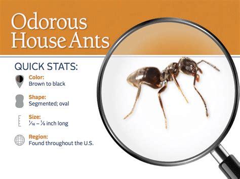 ant control desert roots pest control