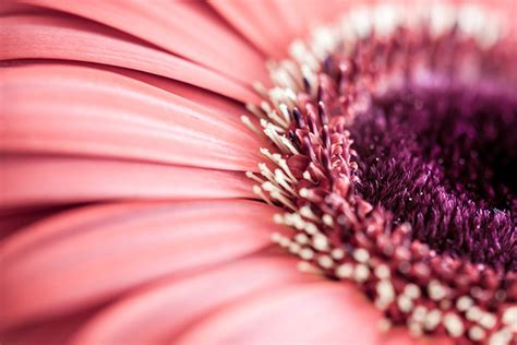creative ideas  macro photography