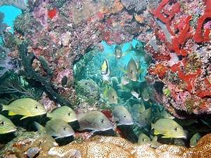 17 best ideas about Marine Ecosystem on Pinterest | Ocean ...