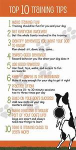 Dog training techniques how to train your dog properly for Dog training methods