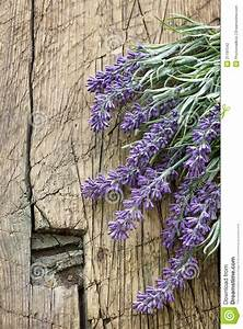 Lavender Stock Photography - Image: 31181542