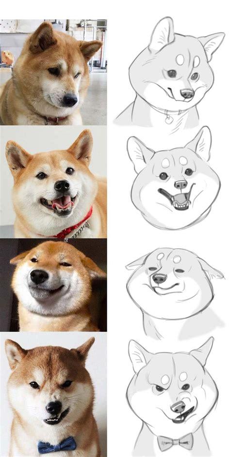 draw corgi dog expressions   cartoony