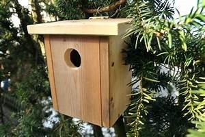 Vogelhaus Bauen Nabu : 1 von 3kostenloser versand vogelhaus bauanleitung kostenlos pdf far ein per mail als datei ~ Buech-reservation.com Haus und Dekorationen
