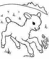 Lamb Sheep Coloring Running Outline Pages Drawing Aroung Meadow Sheet Template Getdrawings Sheeps Called Alpha Coloringsky sketch template