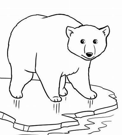 Beruang Gambar Mewarnai Binatang Untuk Ice Yang