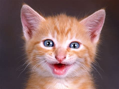 happy cat photo of the day happy cat photosdaily