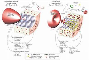 Hemodynamic Shear Stress And Its Role In Atherosclerosis