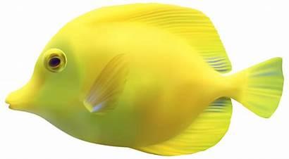 Fish Clipart Tropical Yellow Put Transparent Aquarium