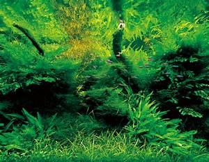 green-nature-aquariums-from-takashi-amano