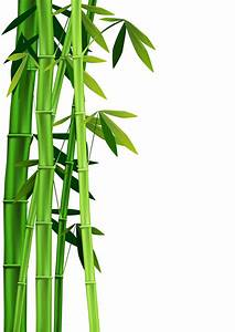 Bamboo clipart bamboo leaves - Pencil and in color bamboo ...
