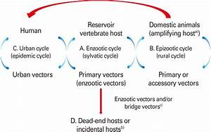 Vertebrate Host And Vector Transmission Cycles   A