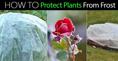 Frost Protection How To Protect Plants From Frost