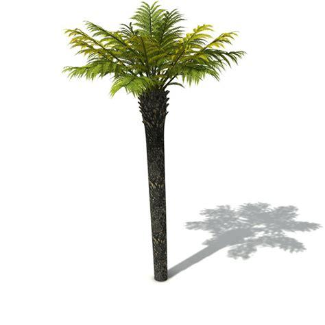tasmanian treefern tree fern  model