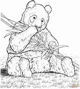 Coloring Pages Bamboo Panda Eats Printable Drawing Paper Crafts sketch template