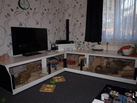 modern guinea pig cage home decoration views