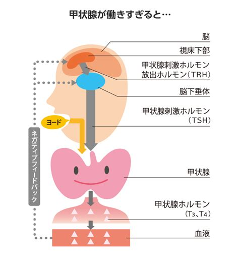 甲状腺 ホルモン 低下