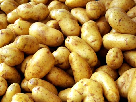 cooking potatoes bulk cooking potatoes the happy housewife cooking