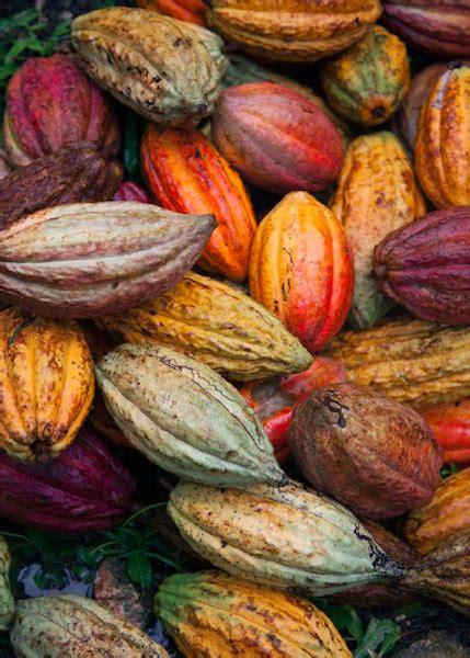 salon cuisinez metizo un mélange de culture dominicaine du cacao et du savoir faire chocolatier français