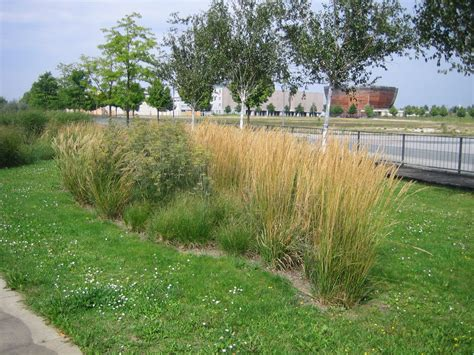 gräser für garten paletten kaufen hannover 100 bett aus paletten kaufen 268 bett der wand wandtattoo