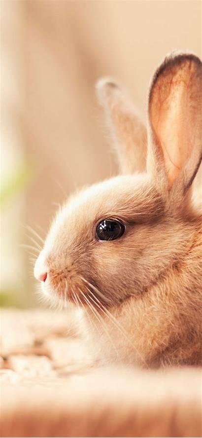 Rabbit Wallpapers Iphone Max 4k Xs 1608