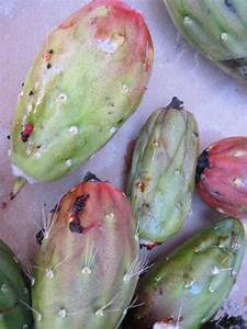 Saguaro Cactus Fruit Harvesting!