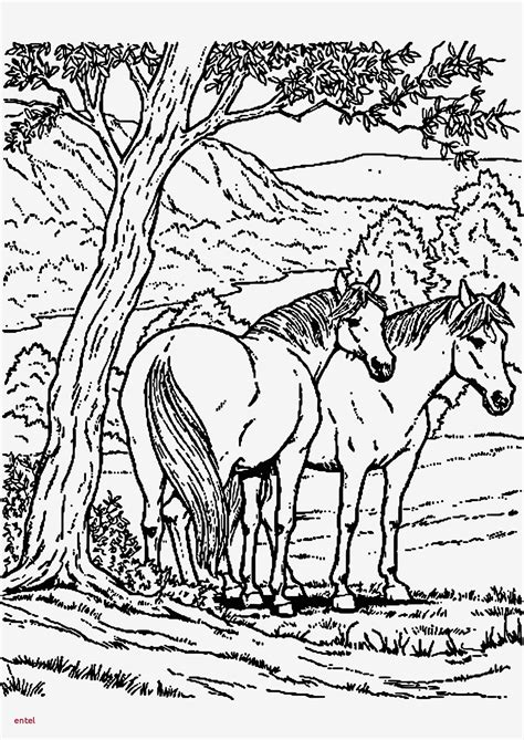kostenlose ausmalbilder pferde bildergalerie bilder zum