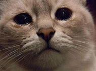 Sad Cat Meme Watery Eyes