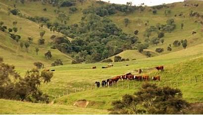 Nz Farm Stuff Right Kanuka Kate Winning