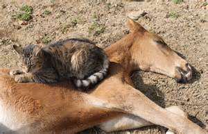 Sleeping Cats and Horses