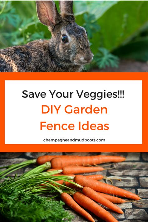 diy garden fence ideas protect  harvest champagne