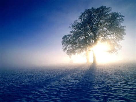 gambar gambar kabut  pagi hari   indah