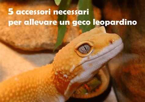 geco alimentazione 5 accessori necessari per allevare un geco leopardino