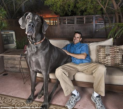 msn cuisine george the 39 s tallest who stood 7ft on his hind legs passes away