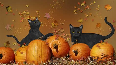 Wallpaper Cat And Pumpkin by Cat Wallpapers Wallpaper Cave