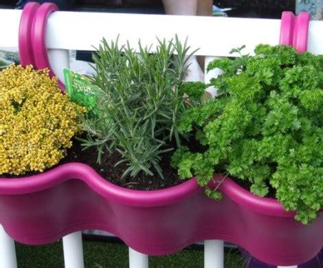 kraeuter pflanzen ein balkon voller duft