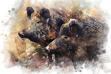 wild boar pig animal  image  pixabay