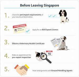 exporting dogs cats ava With pet travel documents