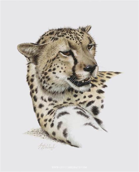 famous wildlife artists images  pinterest