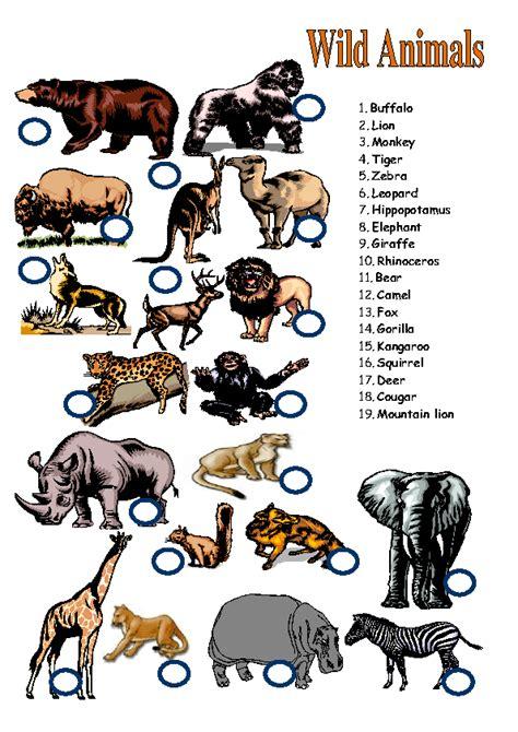 wild animals matching activity