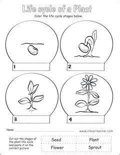 plant life cycle  grade worksheets plant life