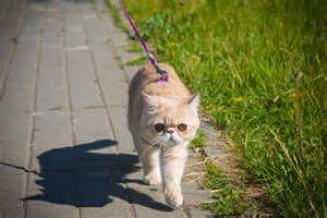 cat leash why an alaskan town is seriously considering a leash