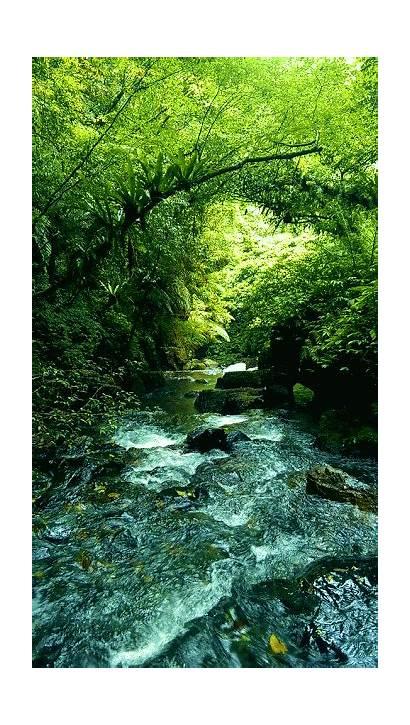 Nature Gifs Scenery Beauty Anime Em Doğa